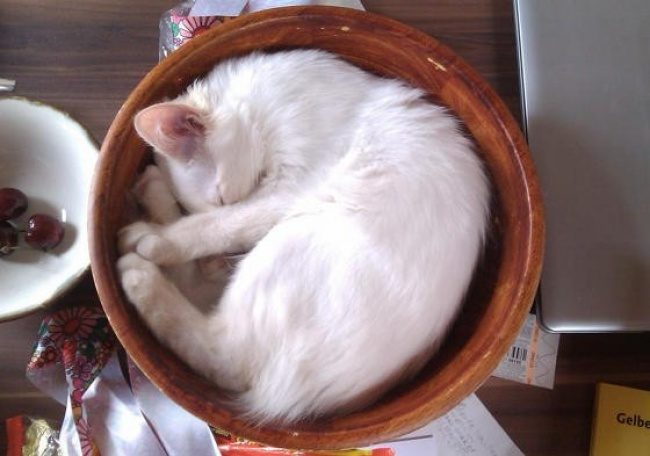 Неожиданные места, в которых можно обнаружить вашего кота