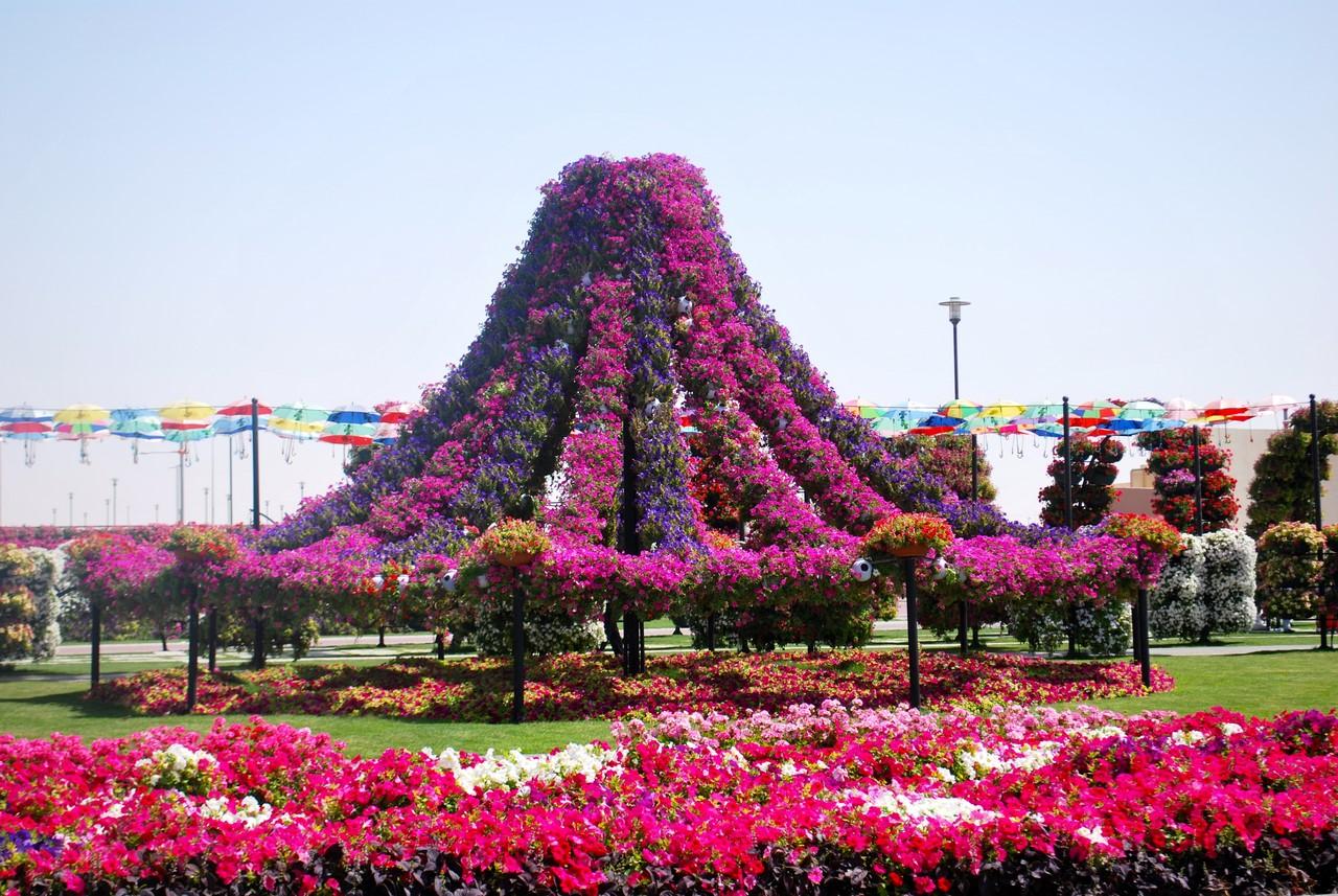 парки цветов мира фото танцует своей мамой