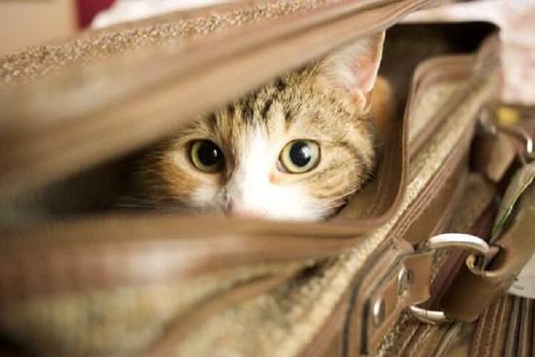 Кошка не пускала свою хозяйку на автобус, будто что-то почувствовала