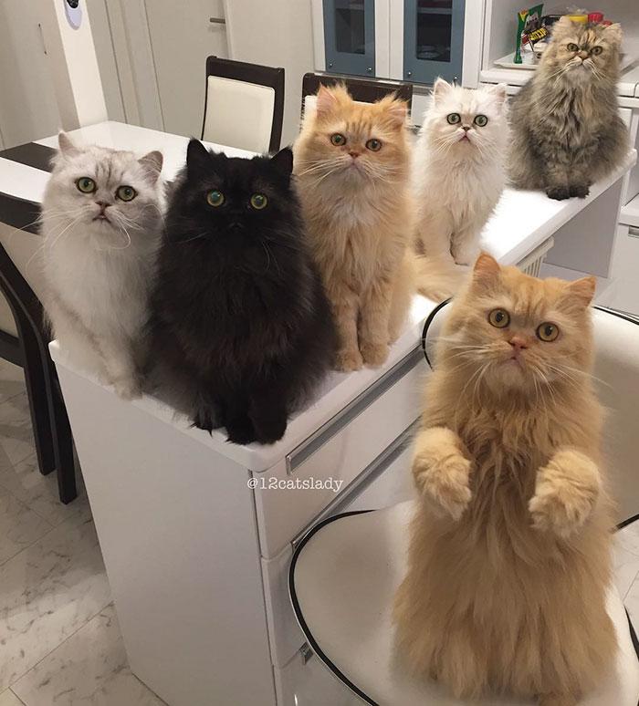 Фотографии двенадцати шикарных кошек поразили всех пользователей социальных сетей!
