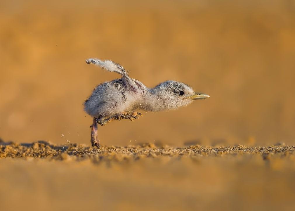 18 раз, когда кто-то увидел просто нереальную птицу - и успел ее сфоткать!