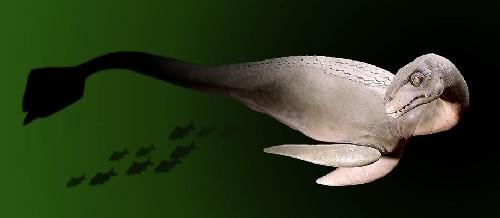 Таинственное морское существо выброшено на берег острова. Легендарный Альтамаха-ха? (2 фото)