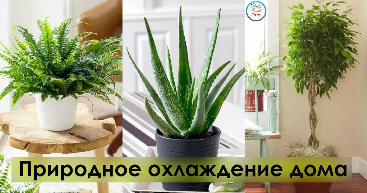 Вот 6 растений, которые помогут сохранить прохладу в доме