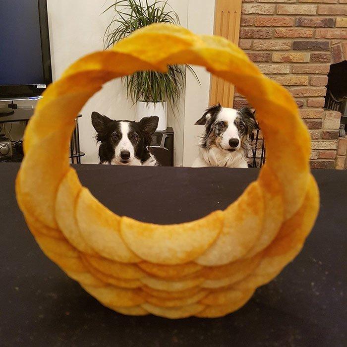 """""""Какой отличный фокус с чипсами! Вот и собакам нравится"""" всемирное тяготение, забавно, закон гравитации, истории в картинках, неожиданно, против законов физики, удивительно, удивительное рядом"""