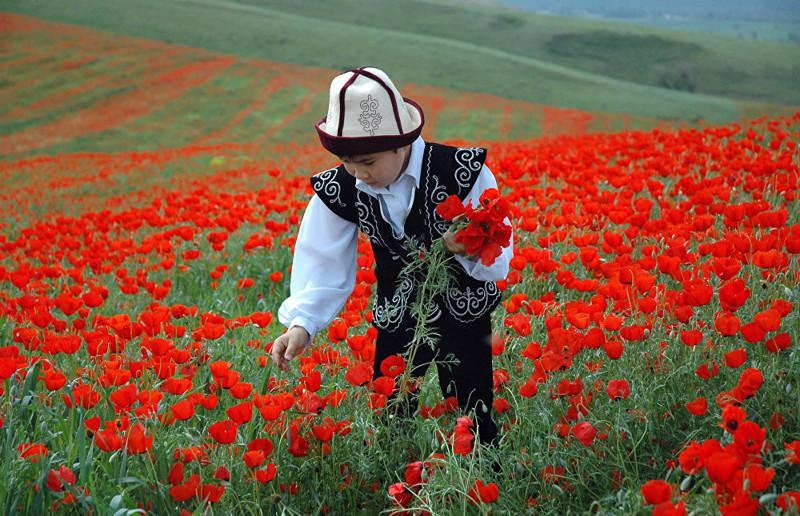 11. Цветок очень нежный и быстро погибает, если его срывают art, Кыргызстан, пейзаж, ссср, факты