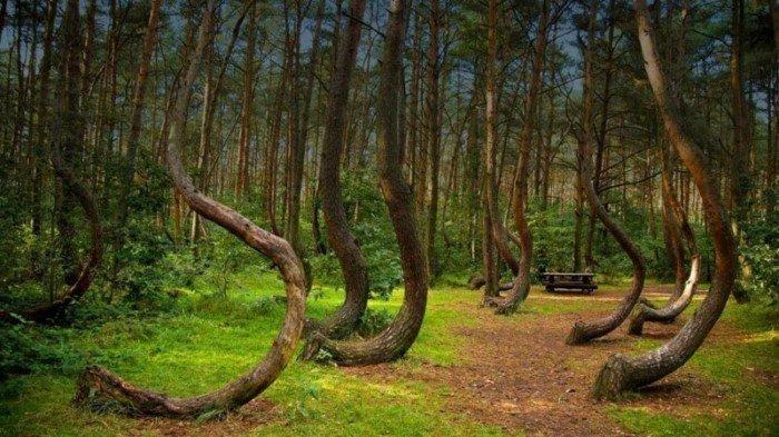 Необычные деревья, созданные эволюцией