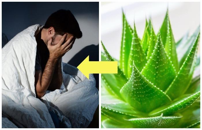 Для тех, кто плохо спит и просыпается разбитым: 5 комнатных растений, которые решат проблему бессонницы
