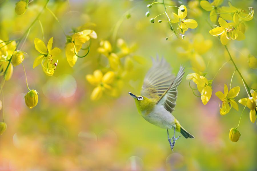 ~ Happy gardener ~, автор — FuYi Chen на 500px.com