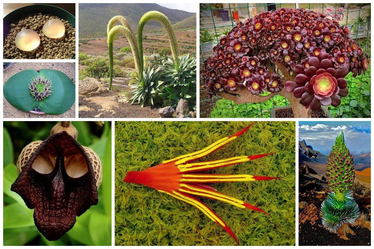 Чудо растения, которые где-то рядом с нами