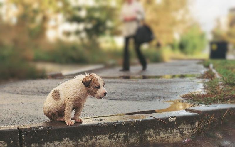От жизни собачьей… Сегодня - Всемирный день бездомных животных