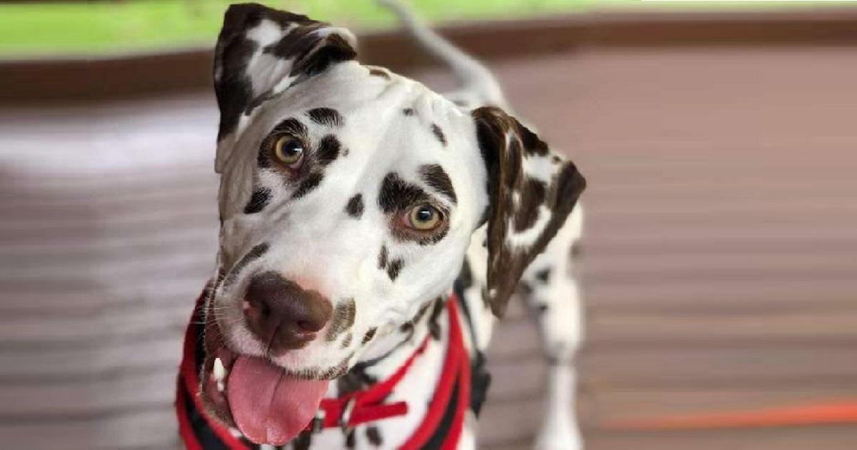 Тяжелая болезнь и одиночество изменили характер собаки, отталкивая от нее людей. А ей просто нужно было понимание…