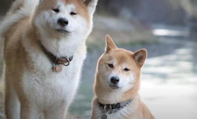 Мужчина не мог понять, куда уплывает его пес: собака узнала дорогу на соседний остров Культура