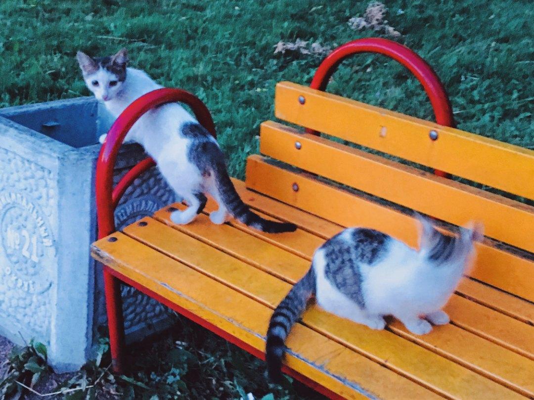 Приютите этих котят хотя бы на время, и из вашего дома уйдут грусть и одиночество!