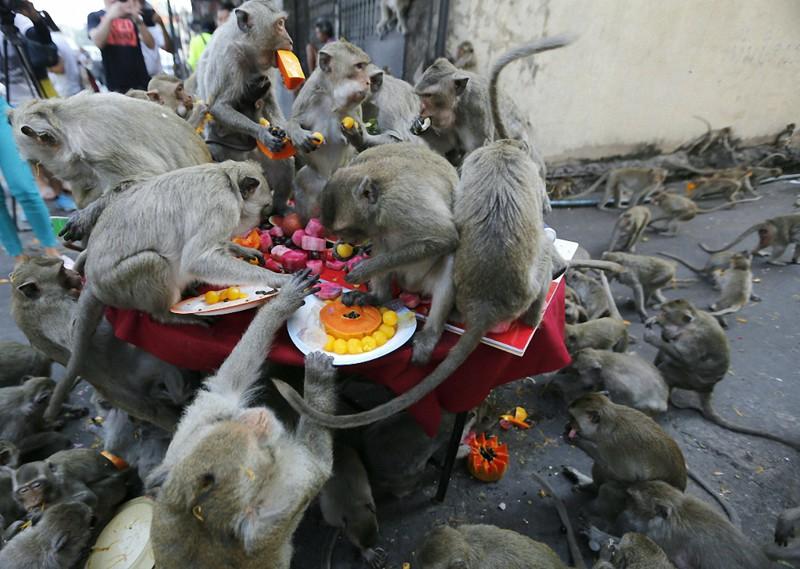 Чего нельзя сказать о тайских голубях. голуби, животные, прикол, юмор