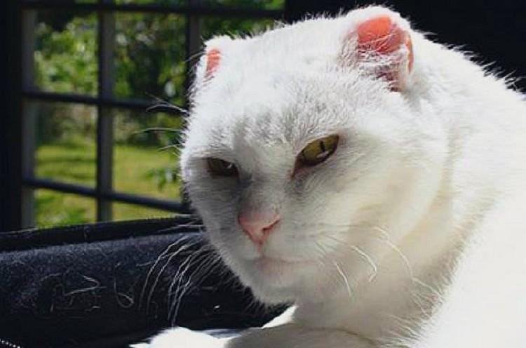 картинки кошка обиделась на кота