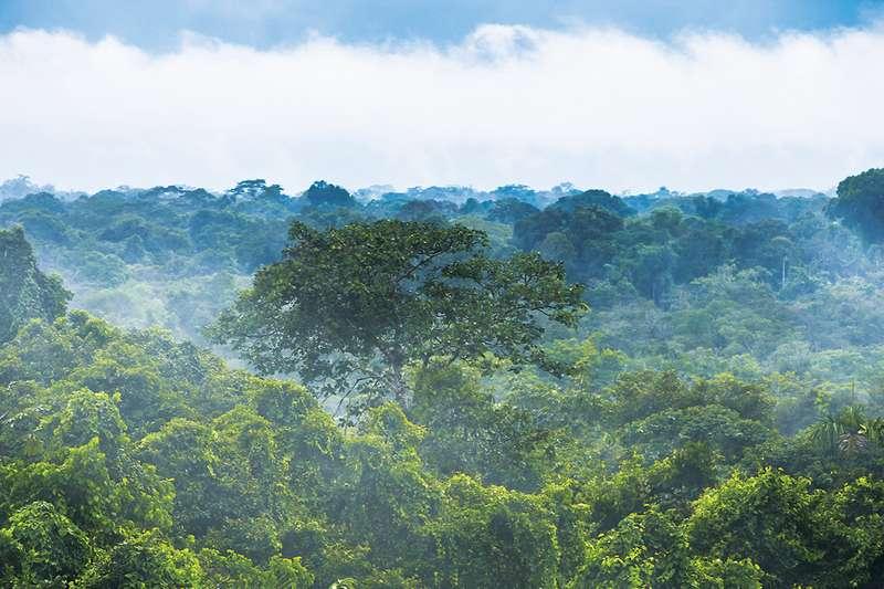 В затерянных городах под джунглями амазонии могли жить миллионы людей