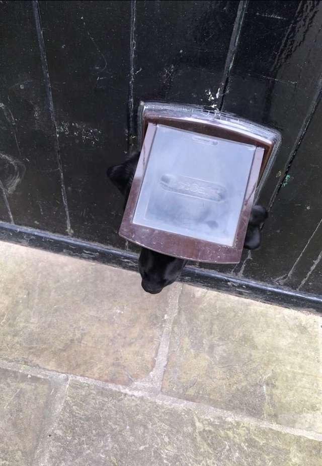 За входной дверью шевельнулась занавеска. Живущий в доме пес что-то хотел от стоявшего на пороге гостя истории из жизни