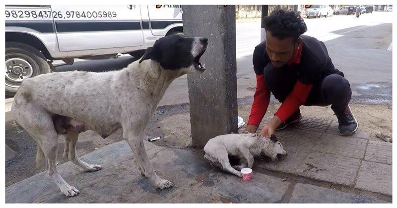 Собака-мать попросила людей о помощи, и они не смогли отказать