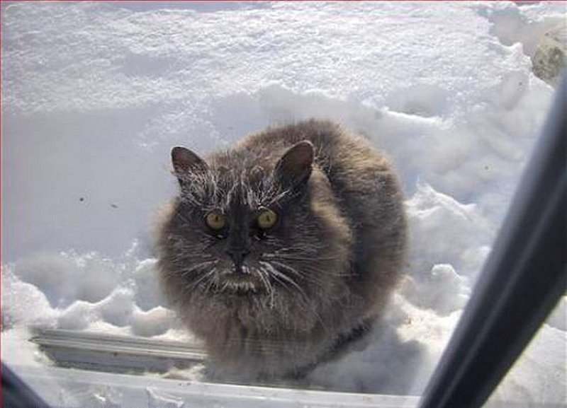 Демотиваторы дорогой ты кота впустил предлагаем вам