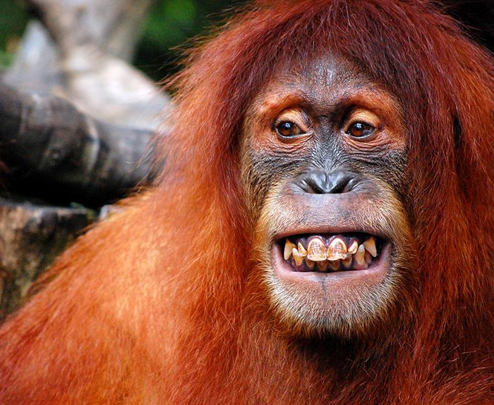 В начале прошлого века идея создания гибрида человека и обезьяны нашла своих сторонников.