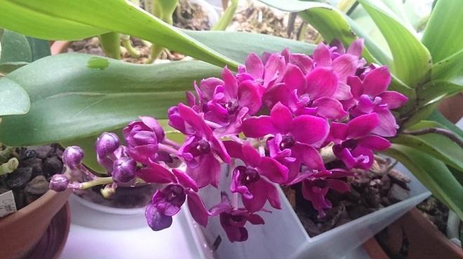 Как сделать витаминный коктейль для орхидей