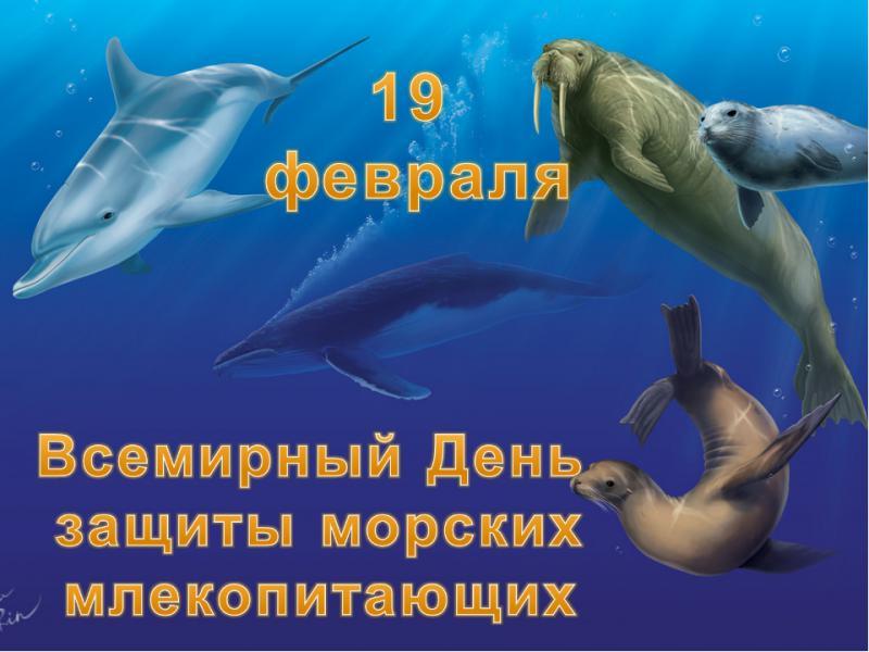 19 февраля Всемирный день защиты морских млекопитающих (День кита)