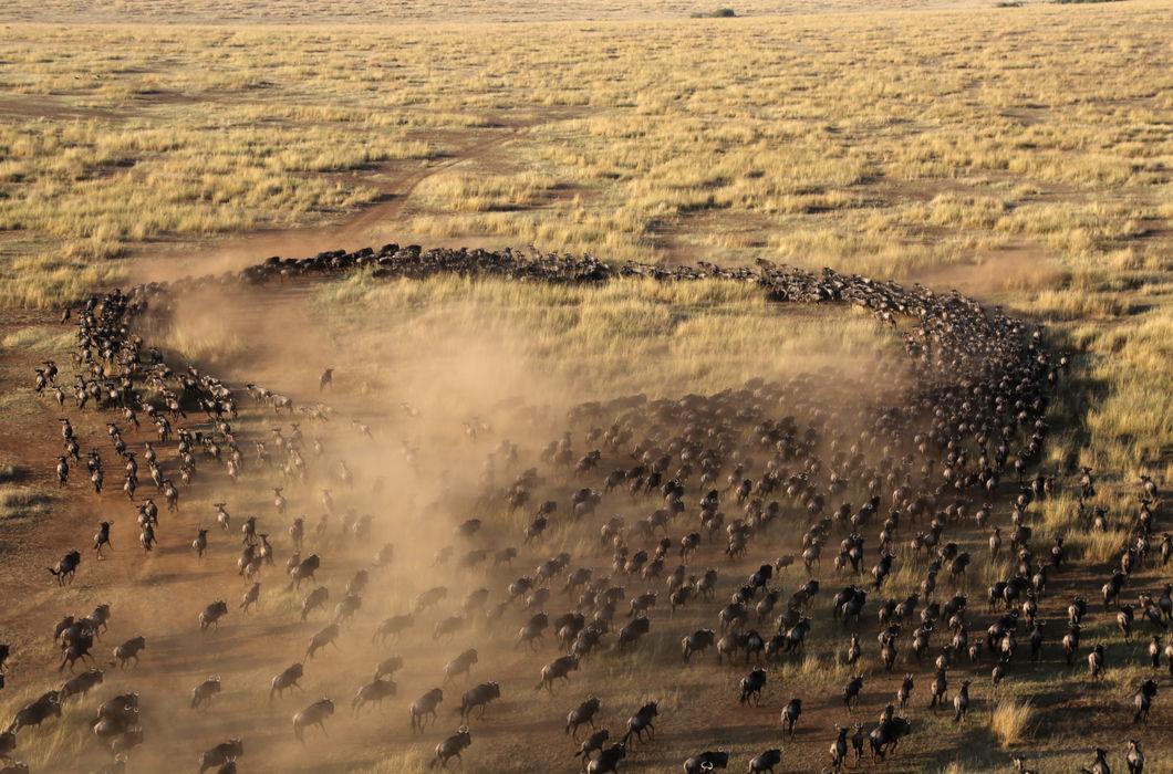 Когда стадный инстинкт прекрасен: фантастические фото мигрирующих стаями животных