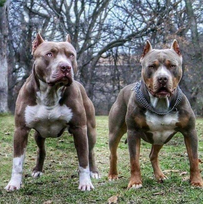 Собачий фотопозитив животные, подборка, собака