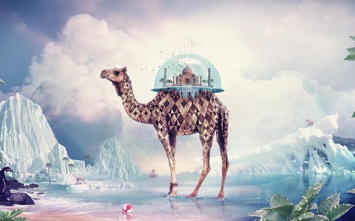 Зарубки на память от мудрого верблюда