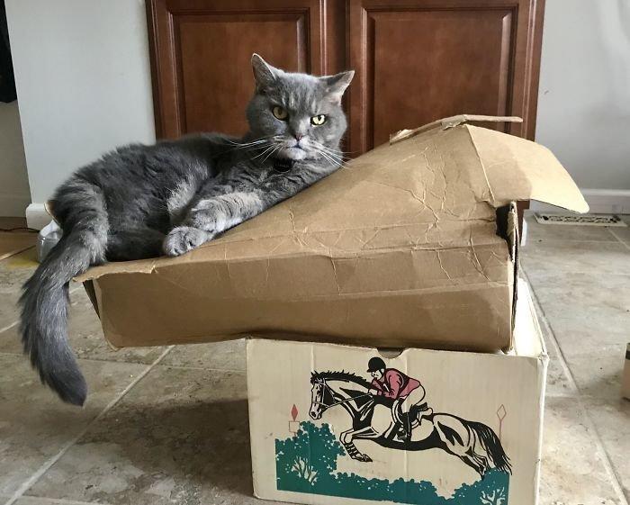 """""""Мой кот - эквилибрист"""" всемирное тяготение, забавно, закон гравитации, истории в картинках, неожиданно, против законов физики, удивительно, удивительное рядом"""