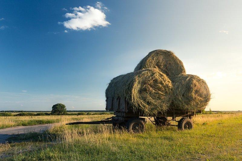 Красота русских полей