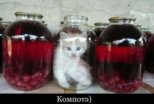 Фото приколы со смешными котами и кошками животные, коты, прикол