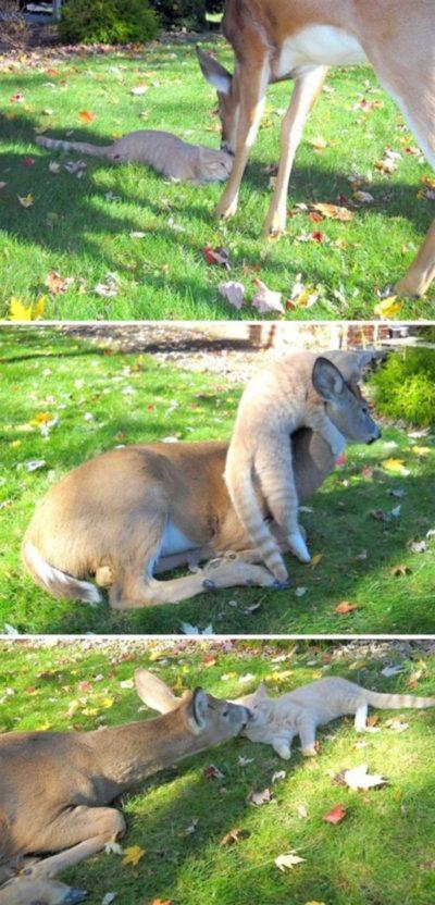 20 фотографий животных, которые однажды пришли в гости, но решили остаться навсегда