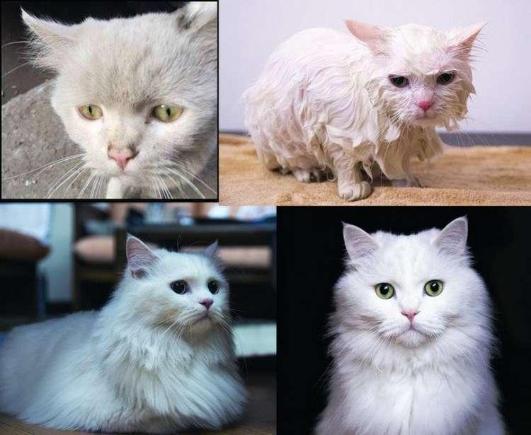 Несколько животных до и после того, как они нашли любящих хозяев