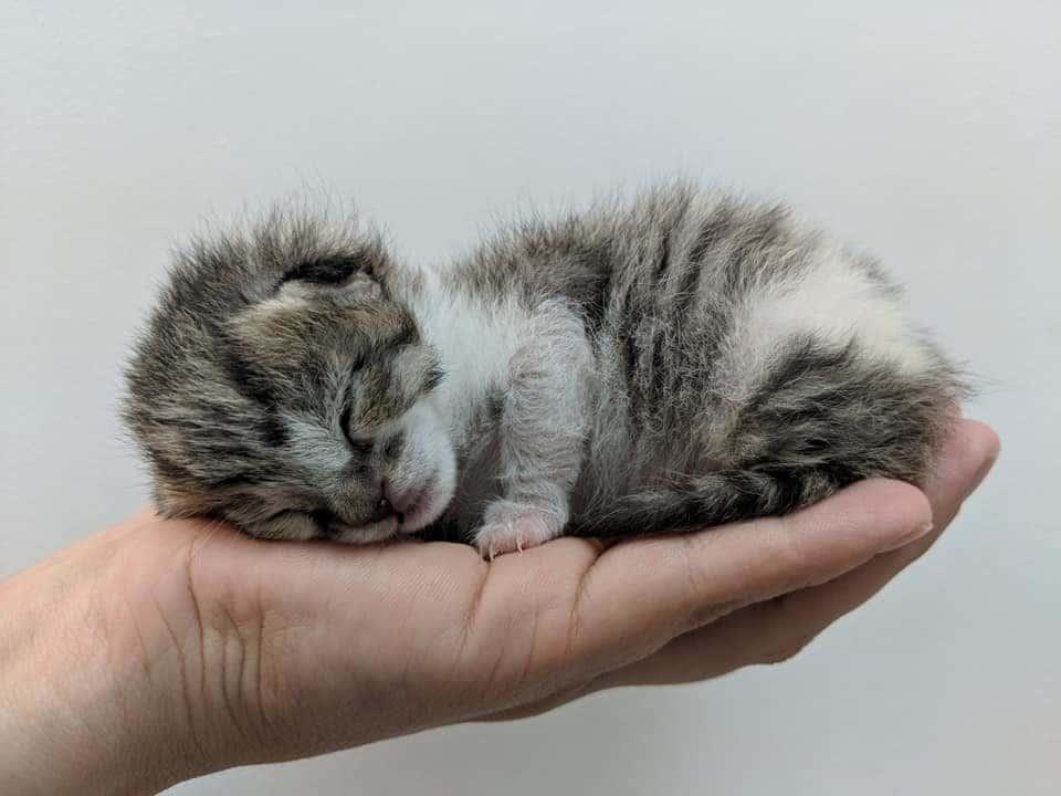 котенок на ладони