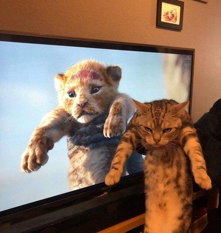 20 смешных фото кошек, у которых своя «особая» логика