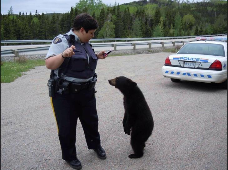 Смешной момент из жизни сотрудников полиции животные, смех, снимок