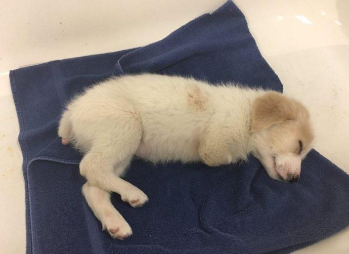 Хозяин выбросил щенка-инвалида в мусорку… Но теперь все от него без ума!