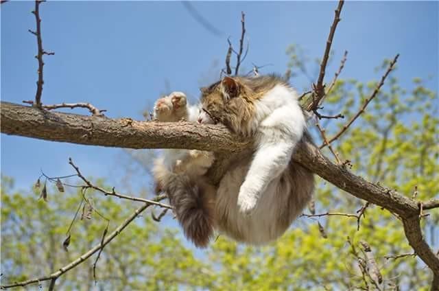 Потому что котам все равно где спать. Главное - спать