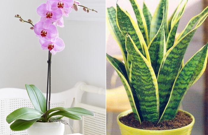 САД, ЦВЕТНИК И ОГОРОД.  Комнатные растения для тех, кто не может часто поливать