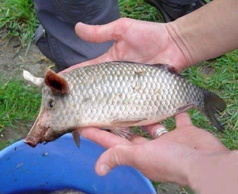 Рыба-мяч животные, прикол, юмор