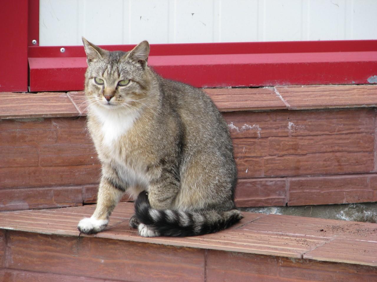 Братья наши меньшие: кошка легла под левый бок