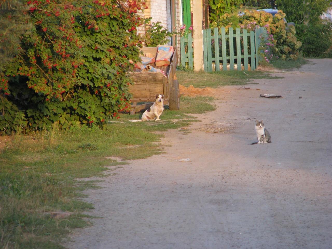 Братья наши меньшие: в народе говорят, что на том свете кошка будет царапать своего убийцу