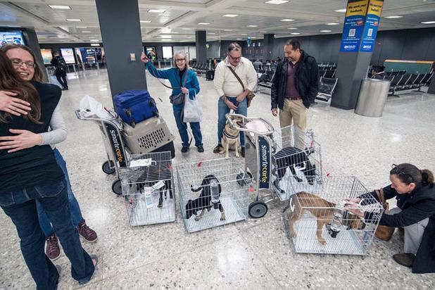 Ради «усыновления» русских собак в США волонтеры разработали спецоперацию