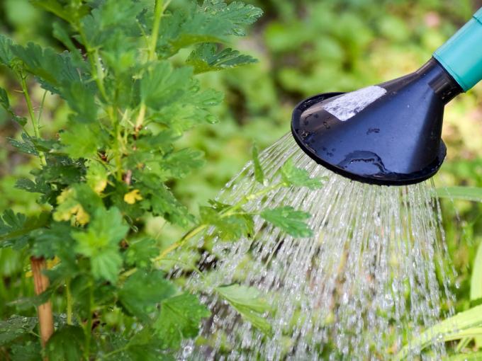 3 главных правила летнего полива