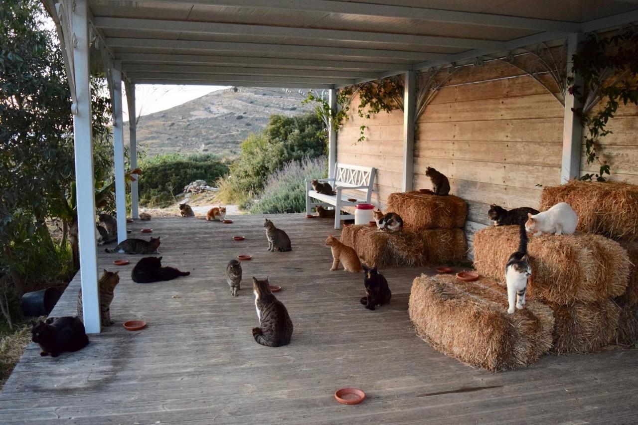Приюту для кошек нужен смотритель. Условия прекрасные!