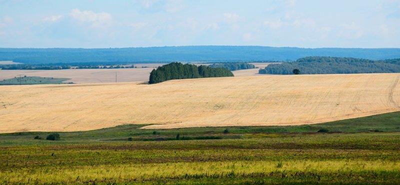 Красота (и пустота) русских полей аграрная культура, поле, россия, сельская местность, эстетика