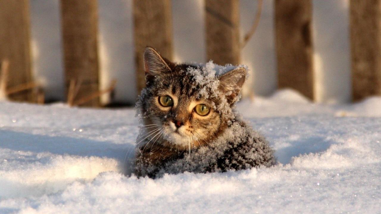 Шокирующие истории о котиках, которых пришлось спасать из весьма странных мест. Часть 1