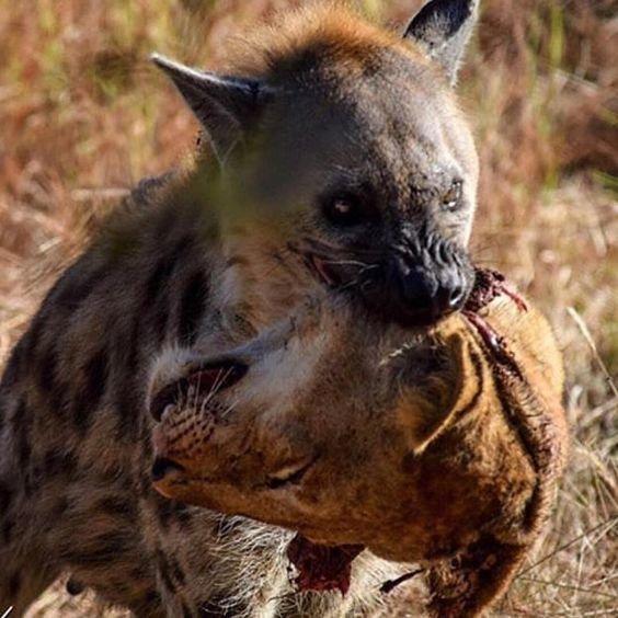 Или ты съешь или тебя съедят жестокая, животные, звери. выживание, интересное, природа