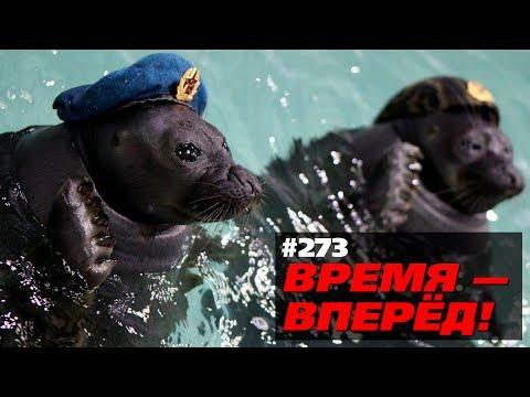Топ наших открытий 2017 года: боевые тюлени, вечные дороги и др. (Время-вперёд! #273)